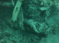 अलबामा तटमुनि फेला परेको ६० हजार वर्ष पुराना रूखका काठ। तस्बिर: सिएनएन